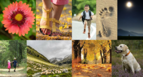 The Many Facets of Walking – Let's move!